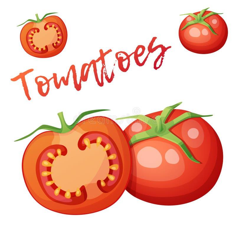 Ganzes und Hälfte des Tomatengemüses Karikaturvektorikone lokalisiert auf weißem Hintergrund vektor abbildung