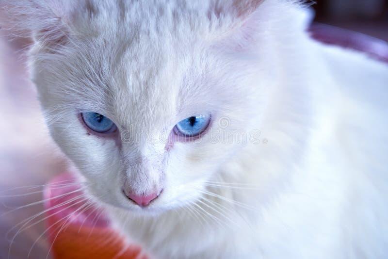 Gapić się od kota zdjęcie royalty free