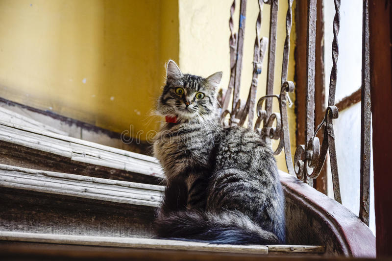 Gapiowski owłosiony kot na schodkach zdjęcia royalty free