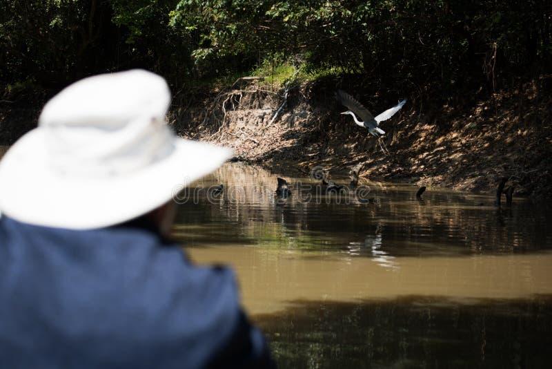 Garça-real de Cocoi olhada pelo homem no barco imagens de stock
