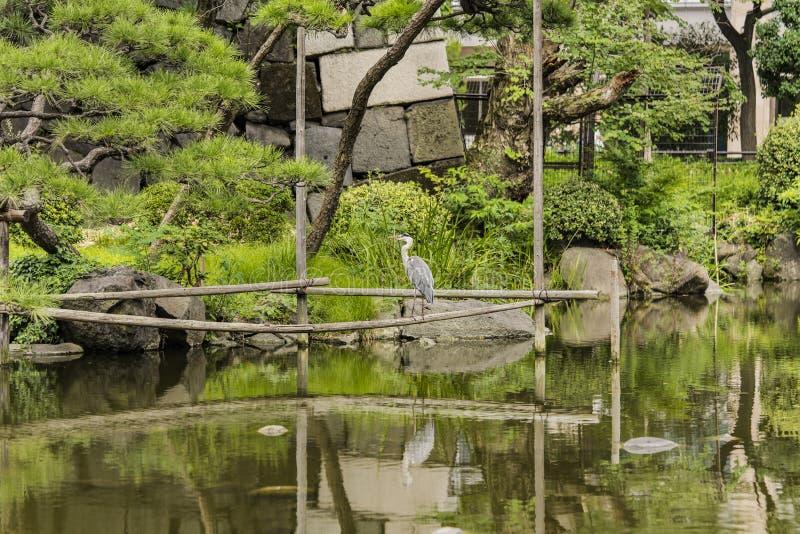 Garça-real japonesa em Shinji Pond no jardim público de Hibiya imagem de stock