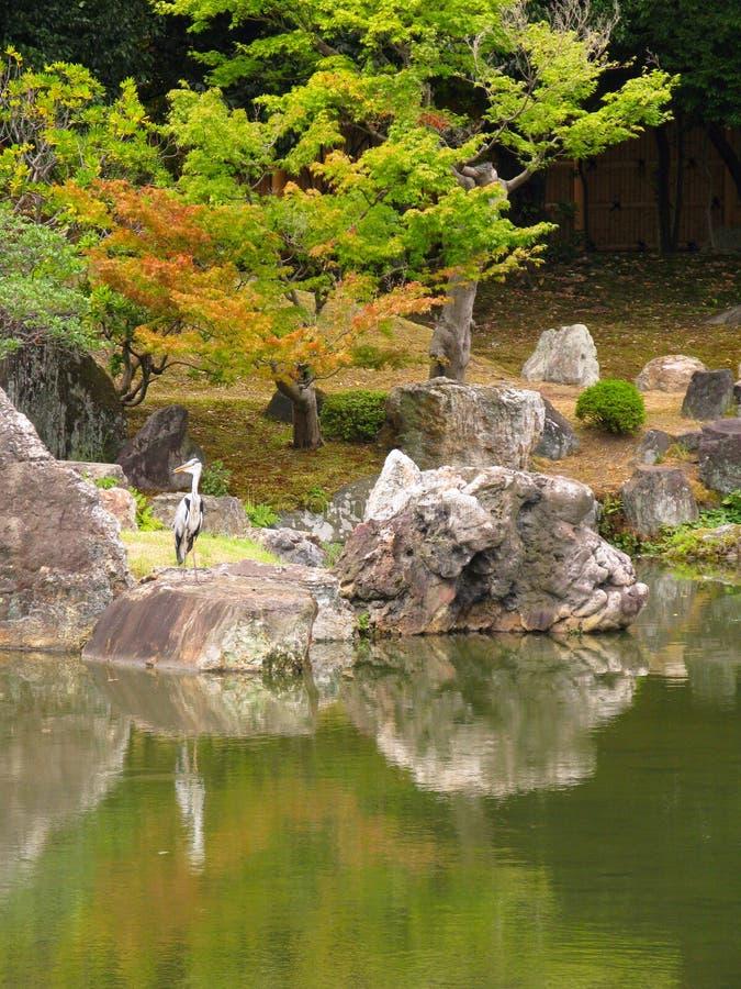 Garça-real no jardim japonês imagens de stock
