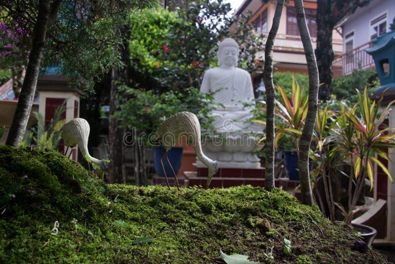 Garças-reais e estátua de pedra de buddha Cenas da vida rural foto de stock