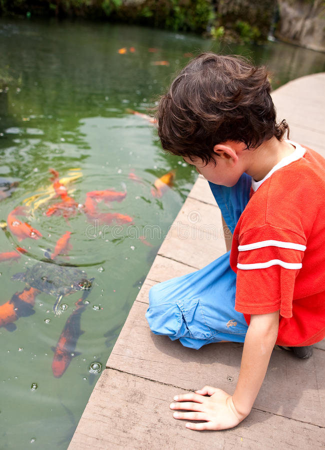 Garçon alimentant les poissons japonais de koi dans l'étang tropical photos stock