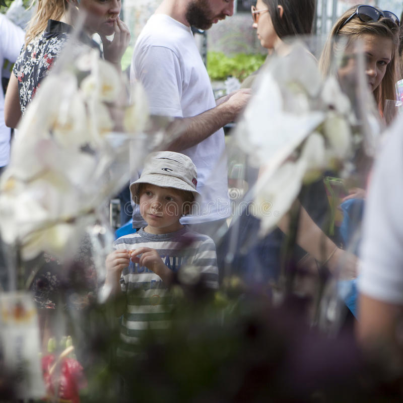 Garçon au Panama considérant des orchidées sur le marché de fleur de Colombie photos libres de droits
