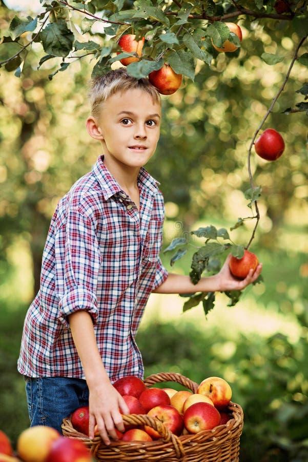 Garçon avec Apple dans le champ de pommiers Belle fille mangeant Apple organique dans le verger Concept de moisson Jardin, consom photographie stock