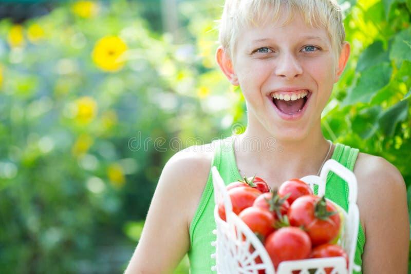 Garçon avec une culture des tomates images libres de droits