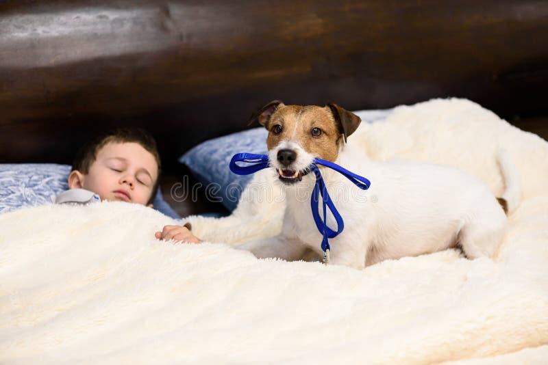 Garçon d'enfant dormant dans le lit et son chien souhaitant faire la promenade image libre de droits
