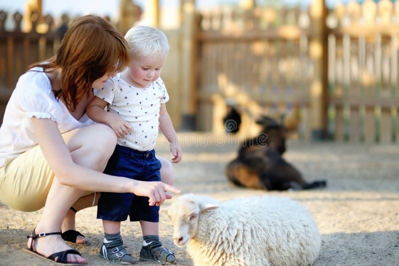 Garçon d'enfant en bas âge et sa mère regardant des moutons images libres de droits
