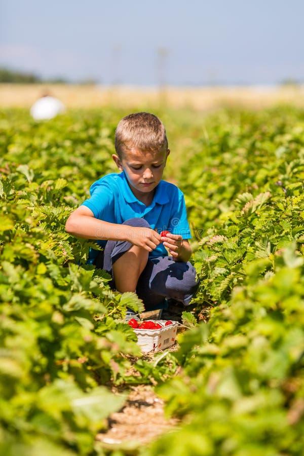 Garçon dans le domaine de fraise photos libres de droits