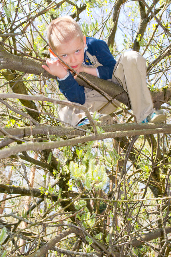 Garçon dans un arbre images libres de droits