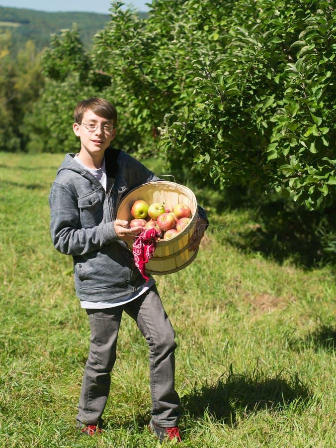 Garçon de l'adolescence dans un fruit de cueillette de verger photo libre de droits