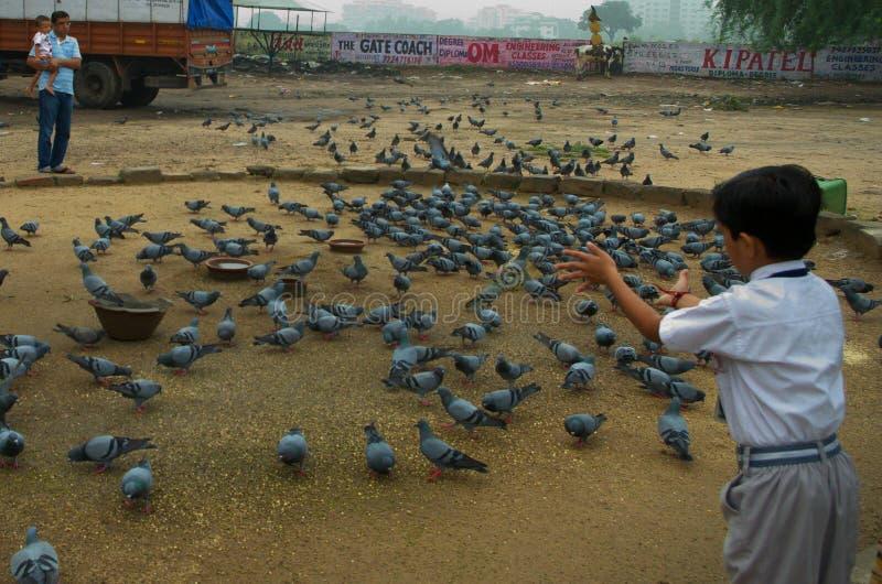 Garçon de Schiool alimentant aux oiseaux photos libres de droits