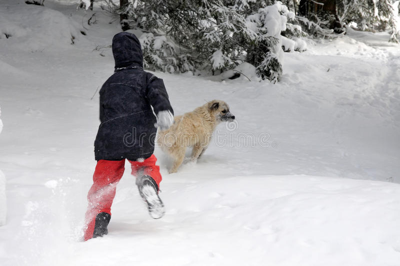 Garçon de Tennage jouant avec le chien photo stock