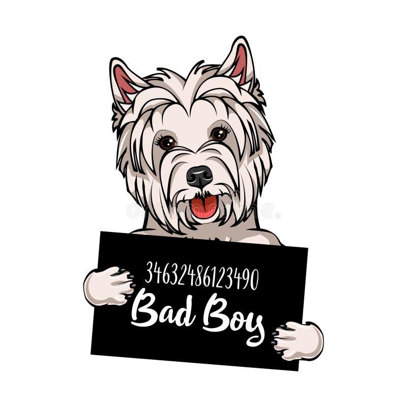 Garçon du mauvais de Terrier blanc de montagne occidentale Prison de chien Fond de photo de police Criminel de Terrier blanc de m illustration de vecteur