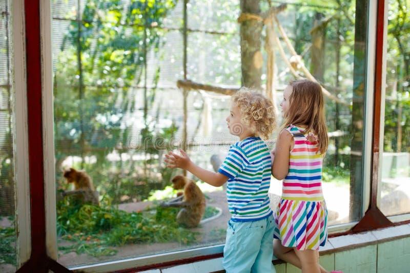 Garçon et fille avec le singe au zoo Enfants et animaux image stock