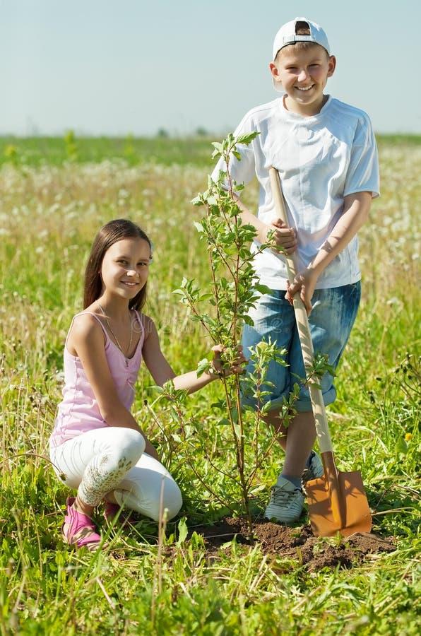 Garçon et fille plantant l'arbre photo libre de droits