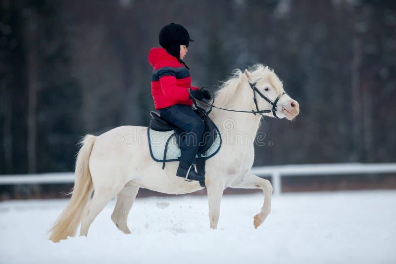 Garçon et poney blanc - équitation à cheval en hiver image libre de droits