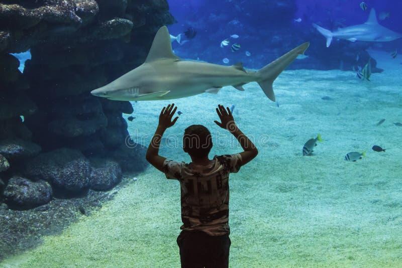 Garçon et requin photo stock