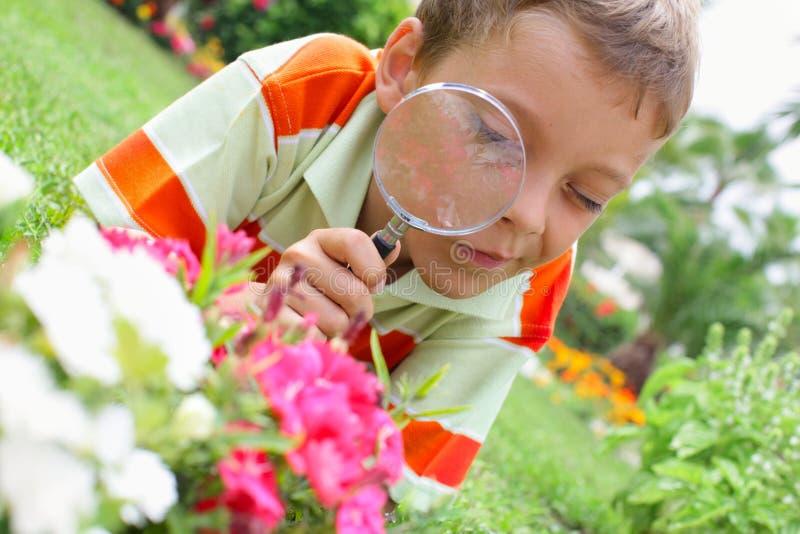 Garçon, examinant avec une fleur de loupe image stock