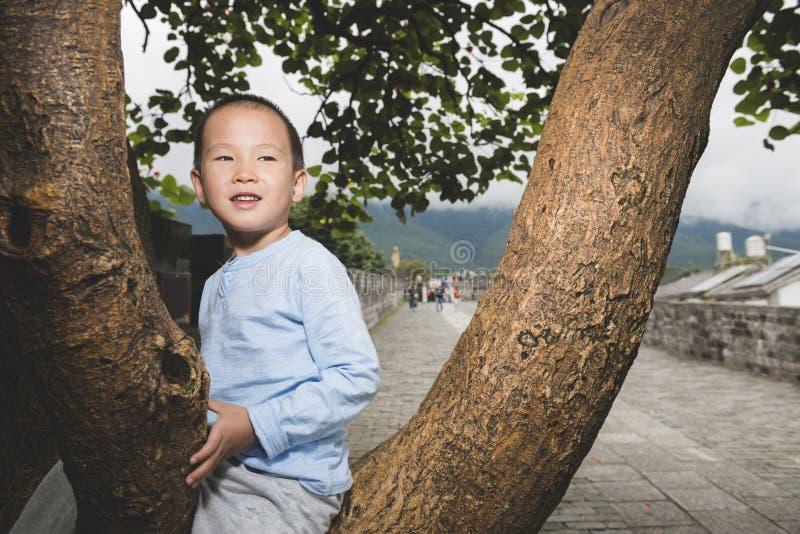 Garçon heureux sur l'arbre image libre de droits