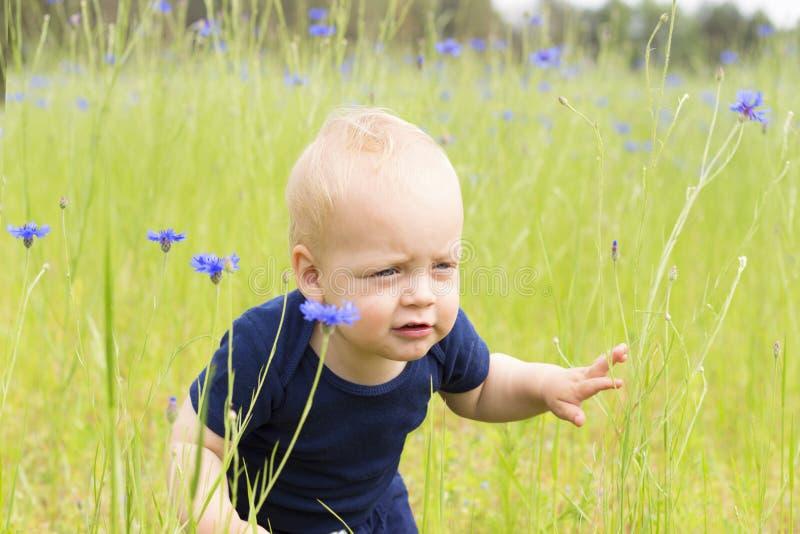 Garçon infantile mignon avec l'expression du visage drôle dans le domaine de centaurée photos libres de droits