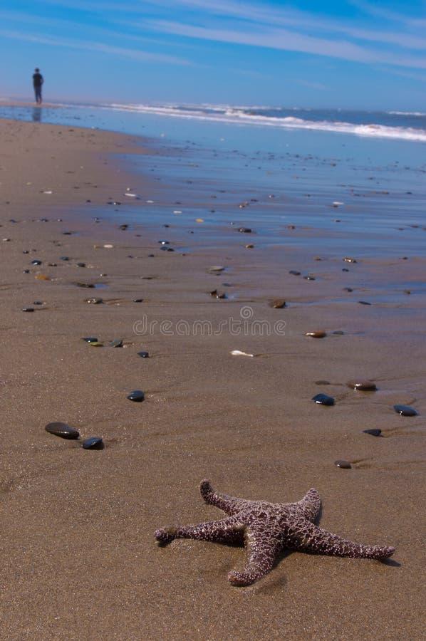 Garçon marchant à partir des étoiles de mer sur la plage photographie stock libre de droits