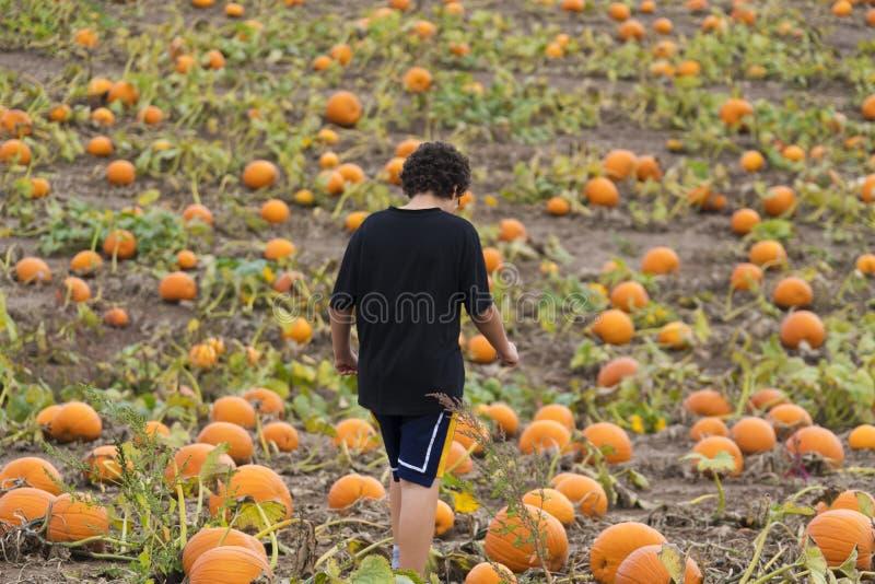 Garçon marchant par le champ de correction de potiron recherchant l'unité centrale de Halloween photo libre de droits