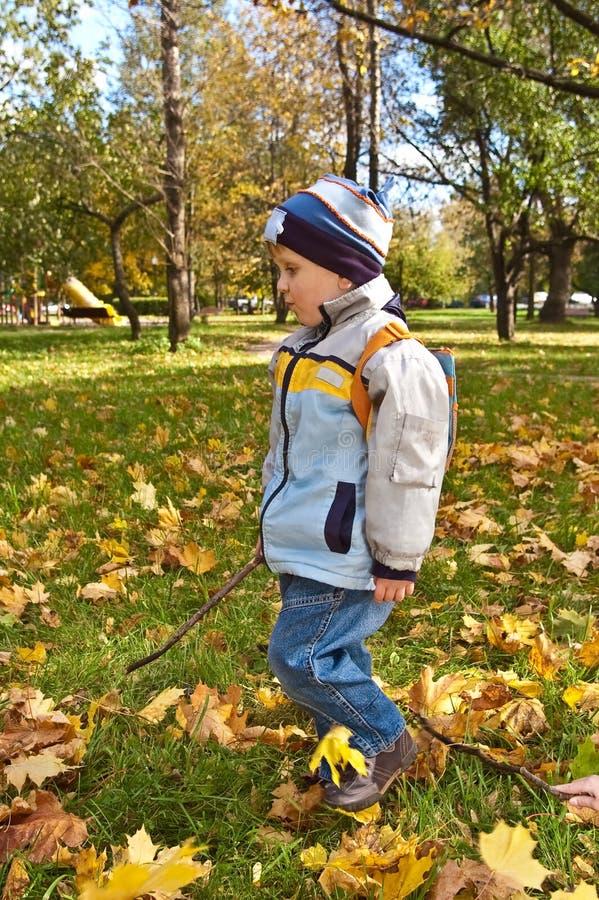 Garçon marchant sur la pelouse avec des lames d'automne photographie stock libre de droits