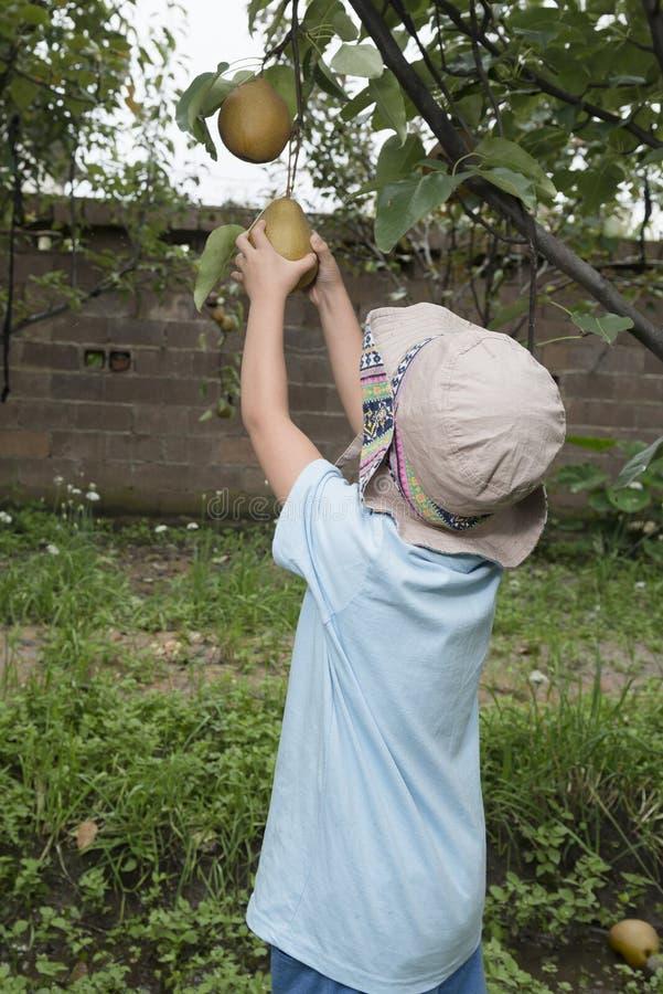 Garçon plumant la poire photo libre de droits