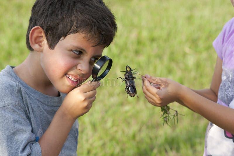 Garçon regardant le coléoptère par la loupe images libres de droits