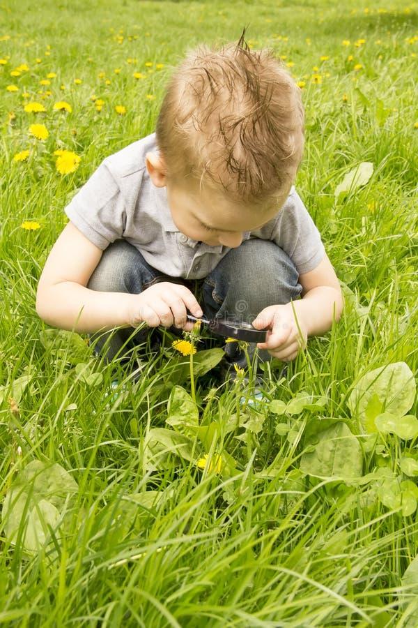 Garçon regardant par une loupe sur l'herbe photo libre de droits