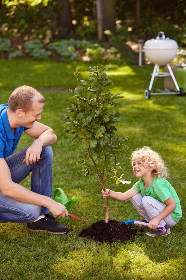 Garçon tenant un petit arbre photographie stock libre de droits