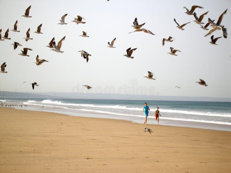 Garçons chassant des oiseaux images stock