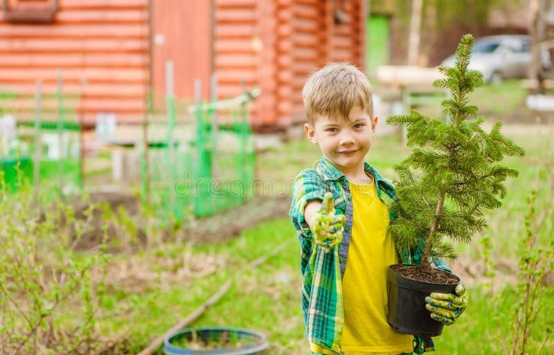 Gar?on avec la jeune plante d'arbre montrant le pouce  photos libres de droits