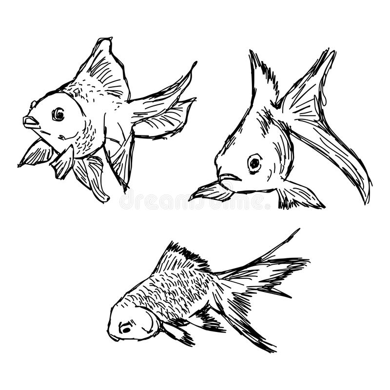 Garabatos del drenaje de la mano del vector del ejemplo del sistema de los pescados del oro aislado stock de ilustración