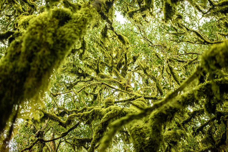 Garajonay park on La Gomera island. Close-up view on evergreen forest in Garajonay national park on La Gomera island in Spain royalty free stock images