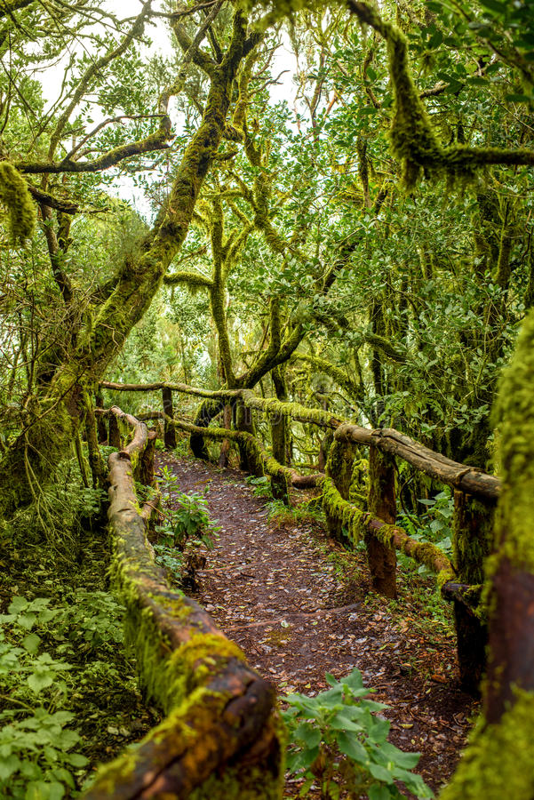 Garajonay park on La Gomera island royalty free stock image
