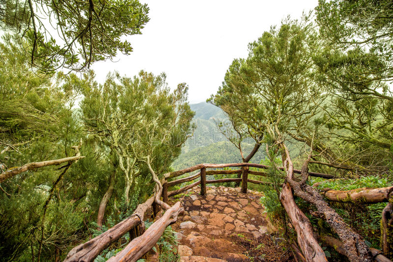 Garajonay park on La Gomera island. Evergreen forest in Garajonay national park with viewpoint terrace on La Gomera island in Spain stock images