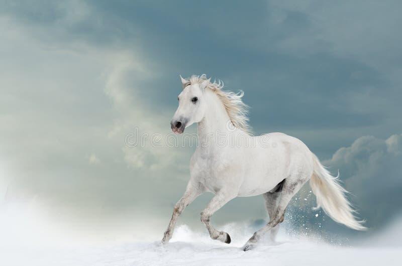 Garanhão branco bonito no inverno foto de stock royalty free