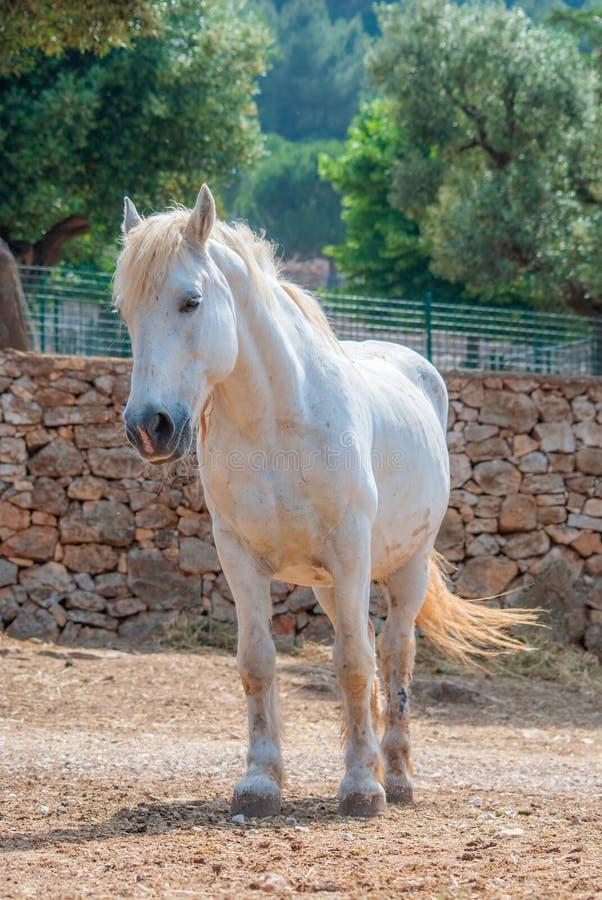 Garanhão de cabelo branco novo com seu cabelo louro fotografia de stock