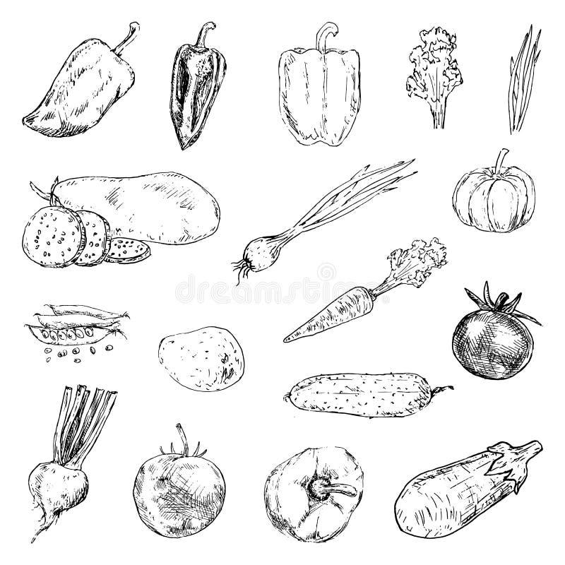 Garatujas ajustadas vegetais tiradas mão Ícones do estilo do esboço Decoratio ilustração do vetor