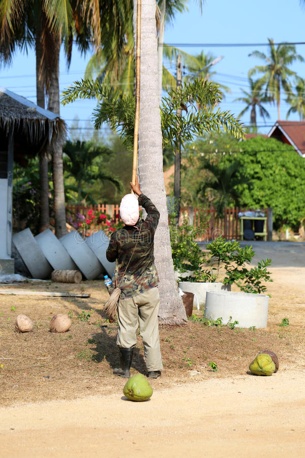 Download Garbage coconuts editorial photo. Image of healthy, feed - 39915091