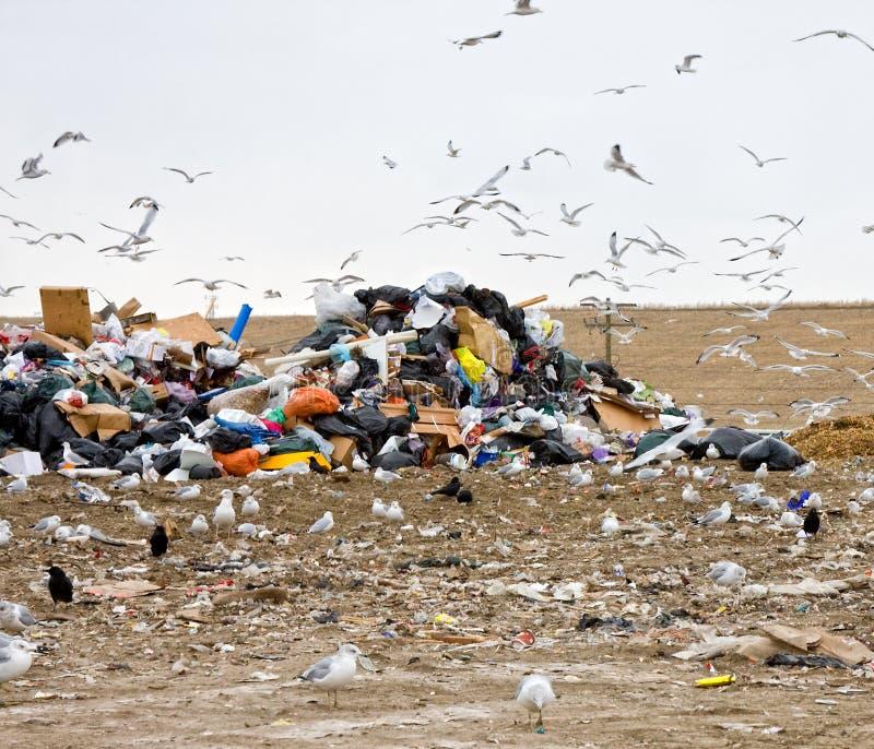 Download Garbage dump stock photo. Image of refuse, garbage, dirty - 11321946