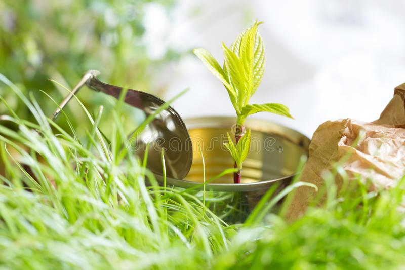 Garbage  ecology ecosystem and adaptation concept with tin and plant. Abstract royalty free stock photos