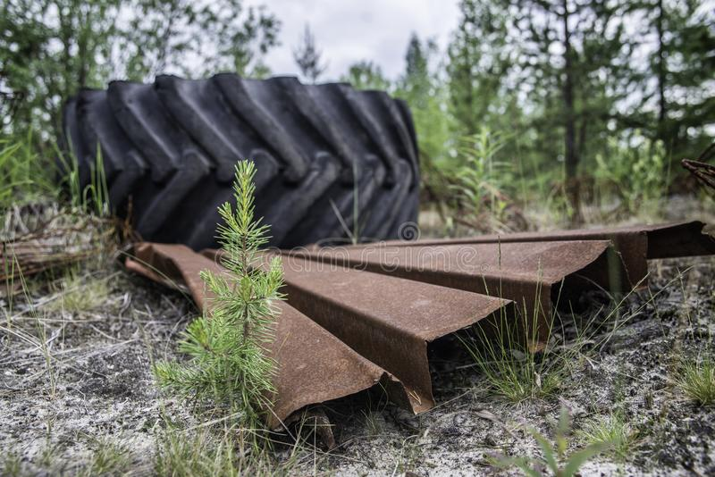 Garbage in the forest. royalty free stock photo