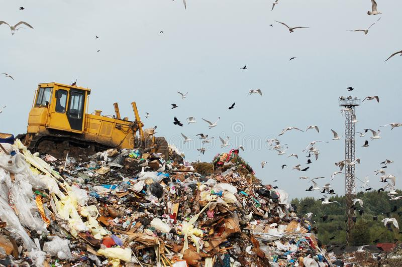 Garbage truck dumping the garbage on a landfill. A bulldozer tractor pushes garbage from a mountain in a city dump on the background of a large number of gulls royalty free stock photo