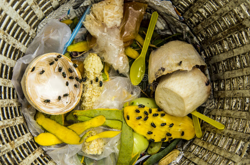 Garbage waste and flies. royalty free stock image
