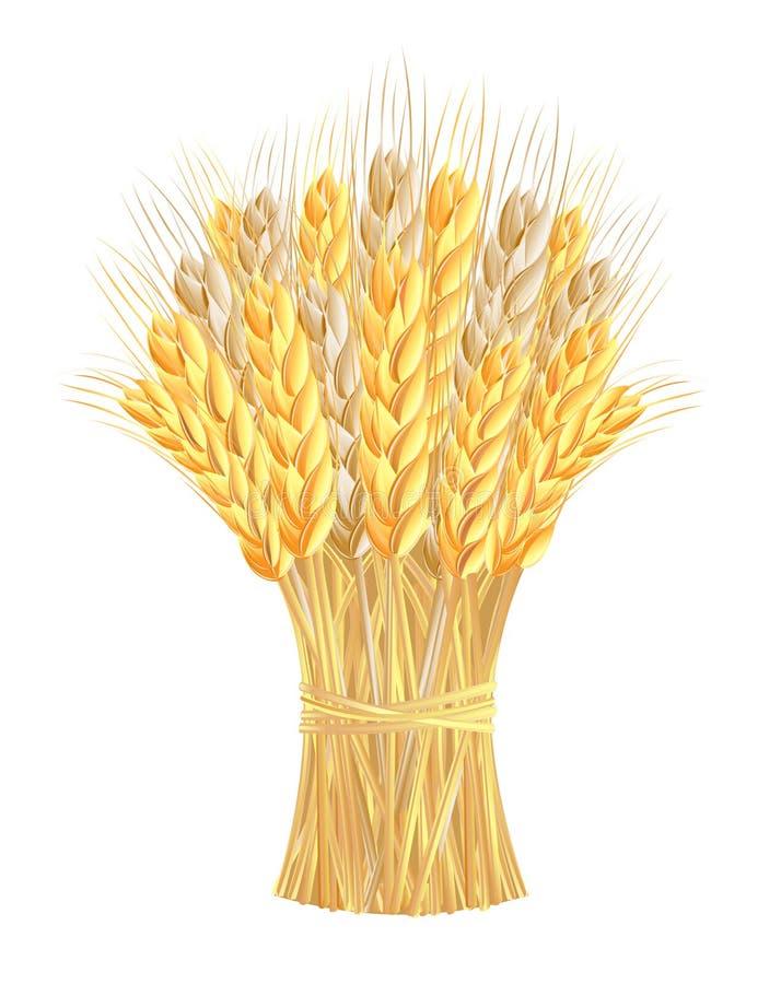 Garbe Weizenohren vektor abbildung