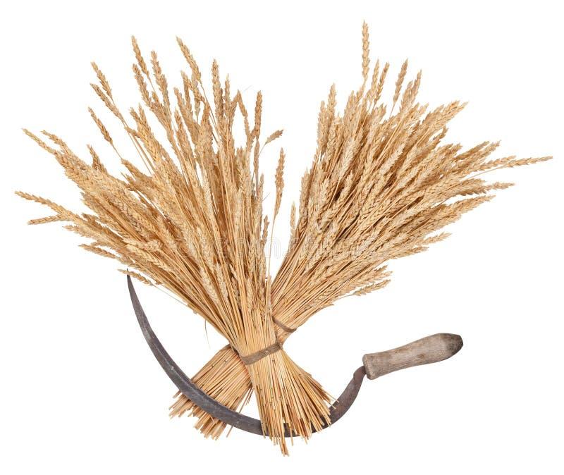 Garben des Weizens und der Sichel stockfoto